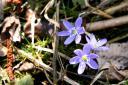 Frühling in der Milser Au