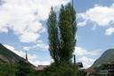 Napoleonpappel mit Blickrichtung Dorf