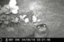 Nachtaufnahme Fischotter